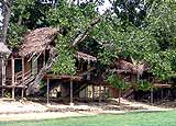 Tree House Village